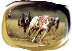 """Изображение к статье  """"Собачьи бега для кадровых агентств"""""""